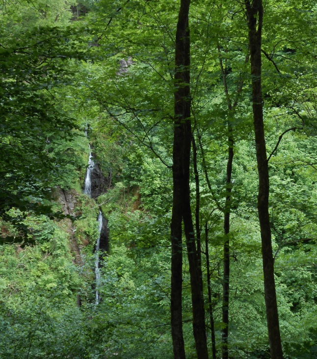 Wildbach bei Charleroi