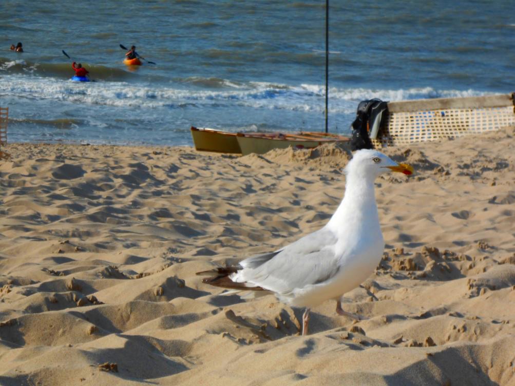 Kajak und Möwen an der Nordsee