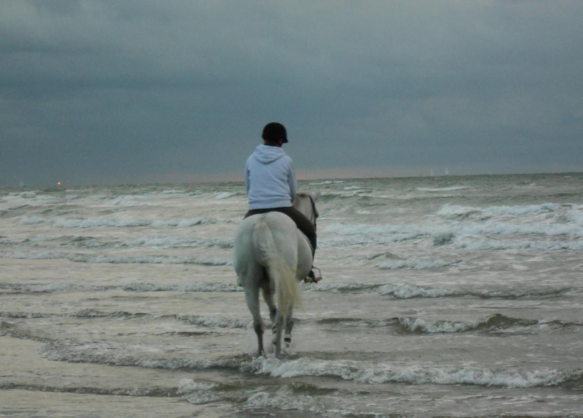Reiten an der belgischen Küste